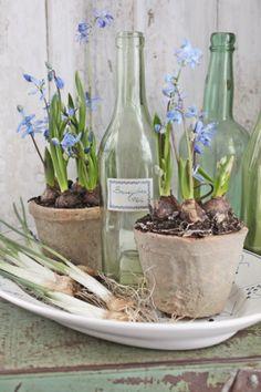 Spring Bulbs by viebekedesign #Flowers #Gardens #Spring_Bulbs
