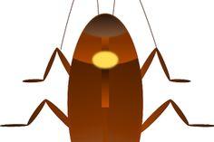 Las cucarachas son insectos que provocan, en la gran mayoría de los seres humanos, una tremenda repulsión. ¡Espántalas usando los remedios caseros!