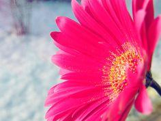 Pink by c-o-l-o-r-s.deviantart.com on @deviantART