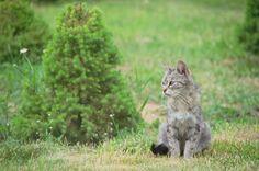 wild cat in our garden