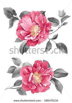 stock-photo-watercolor-illustration-flowers-in-simple-background-166470134.jpg (327×470)