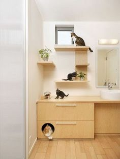 I like this idea for a place to keep a cat litter box in a bathroom...