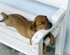 Adorable jeune Chien qui dort la gueule posée sur l'accoudoir d'un banc.