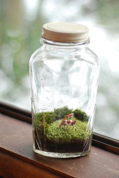Miniature landscape with wee cows in lovely vintage jar.