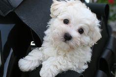 I need a puppy