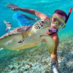 would love to swim with turtles!