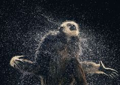 More than Human: The emotional Animal Portraits - Knowledge Paradise
