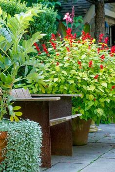 A large potted 'Dancing Flame' salvia is just one of the rare cultivars at home on this back patio. See more of this lovely garden here. | Photo: Rob Cardillo | thisoldhouse.com