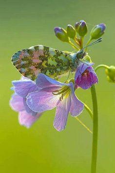ღ This little Winged Beauty Blends Right In.....
