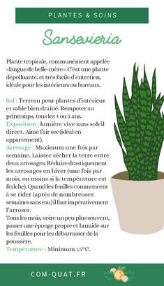 Sansevieria Sansevieria You can find Permaculture and more on our website.