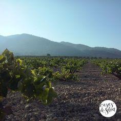 Paisaje de viñedo uva Airén de cepas viejas desde la Sierra de Salinas - Yecla (Murcia) España