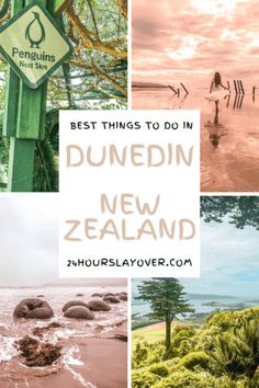 In Dunedin and wondering what to do? Being the wildlife capital of New Zealand there is so much to do here: read on to find out what to do in Dunedin! Capital Of New Zealand, New Zealand Cities, New Zealand Travel, Dunedin New Zealand, Moeraki Boulders, Stuff To Do, Things To Do, Amazing Destinations, Travel Destinations