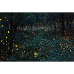 Japanese nature photography Photographer captures magical nighttime... ❤ liked on Polyvore featuring backgrounds