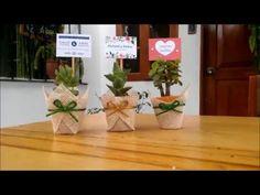 Resultado de imagen para plantas como recuerdos de primera comunion