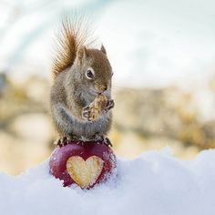 Throughout my entire life I have loved squirrels. Seeing a squirrel causes me to smile immediately.