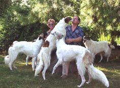 Borzoi. These are my favourite dogs and the inspiration behind the dragon dogs (named for hunting dragons, yanno, kinda like a fox hound, which is not a fox crossed with a dog...oh never mind. :P)