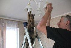 Cat Helps Screw In Lightbulb