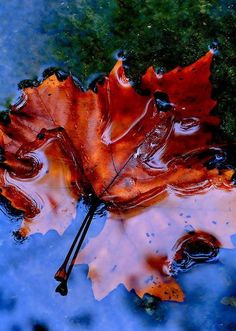 Wet Colour ~ Photo by...?