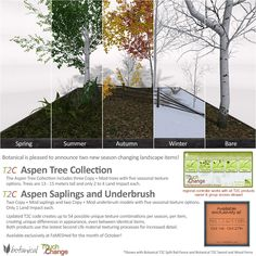 Touch 2 Change Aspen Trees, Saplings and Underbrush - Botanical