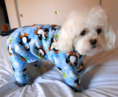 Dog Pajamas - Winter Penguin Pattern, Flannel - Adorable