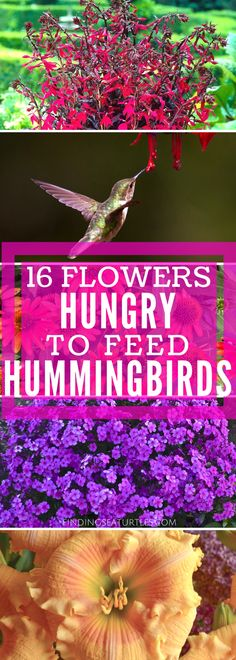 16 Perennials That Attract Hummingbirds to Your Garden! – Michelle Shambora 16 Perennials That Attract Hummingbirds to Your Garden! 16 Perennials for Hungry Hummingbirds