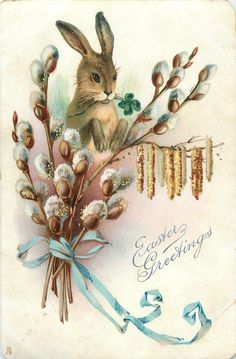 EASTER GREETINGS  rabbit with paws up behind pussy-willow & catkins