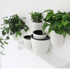 Sungmor Gardening 3 Pieces Creative Hanging Planter Self Watering Flowerpot Wall Mounted Plants Holder w Long Time Water Storage Function Large 195cm185cm Hanging Flower Pots, Plastic Planter, Pot Plants, Planters, Plant Pots, Garden Planters, Potted Plants, Planter Boxes, Plant
