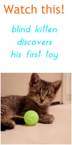Animal Video Of The Day - Blind Cat Discovers Toy ... see more at PetsLady.com ... The FUN site for Animal Lovers