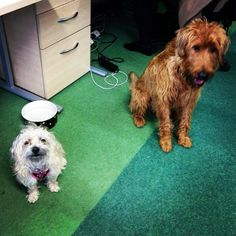 Say hello to the new TBG interns #TBGpets