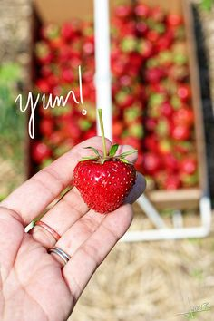 Carandale Farm - Oregon Wisconsin | Inspiration Nook #strawberrypicking #Wisconsin