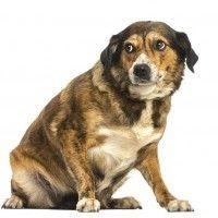 #dogalize Il Linguaggio del cane: Cane stressato, sintomi e rimedi #dogs #cats #pets