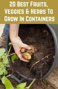 20 Best Fruits, Herbs & Veggies That Thrive In Containers - If you've got space for a pot in your garden, patio or on your balcony, then you can grow food! Container Gardening Vegetables, Container Plants, Vegetable Gardening, Gardening Apron, Gardening Zones, Organic Gardening Tips, Flower Gardening, Organic Farming, Planting