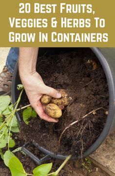 Gardening For Beginners, Gardening Tips, Gardening Services, Gardening Books, Gardening Apron, Flower Gardening, Gardening Supplies, Pot Jardin, Container Gardening Vegetables