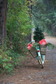 Christmas Bicycle, Me & Something Exciting - FRENCH COUNTRY COTTAGE