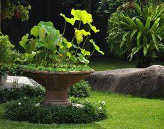 Goodenia Ovata Gold Cover Plants Ideas Brisbane Pinterest