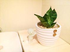 ミニ観葉植物は様々なところに置きやすく、風水としても効果的!100均の雑貨の植え替え方や小さめに管理する方法、置き場所、最近のおしゃれな100均観葉植物のオススメをご紹介!