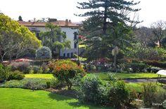 Albumarchief Quinta Da Casa Branca Madeira