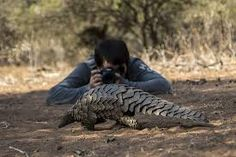 Image result for wildlife photographers