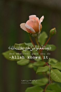 And whatever good you do Allah knows it Beautiful Quran Quotes, Quran Quotes Inspirational, Beautiful Names Of Allah, Islamic Love Quotes, Muslim Quotes, Arabic Quotes, Love Song Quotes, Faith Quotes, Life Quotes