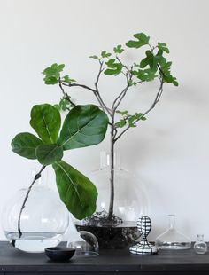 Beautiful accessoires from HEIMELIG Shop. The Pallo vase by Carina Seth Andersson it is just eye candy, Indoor Garden, Indoor Plants, Plantas Indoor, Decoration Plante, Green Plants, Hydroponics, Hydroponic Plants, Houseplants, Planting Flowers