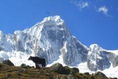 Viaje y conozca el deporte extremo que se vive en el Huascarán.  En nuestro país existe una infinidad de lugares para la práctica de escalada en hielo, un deporte extremo que consiste en ascender pendientes muy prolongadas recubiertos de hielo, con dificultad muchas veces, ya sea por la inclinación o condiciones climáticas.