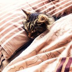 дрихне)😍😴 #cat#sleep#home#lviv#snapspeed#vscocam