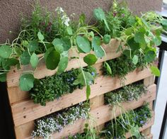 "What a great way to reuse the wooden pallets from a jobsite! You can always sand them down, add some paint or varnish and create a garden installation! Who says railroad ties are the ""it"" planter box..."