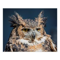 20x16 Great Horned Owl Portrait Poster - animal gift ideas animals and pets diy customize