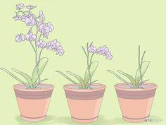 Mini Orchid care/repotting