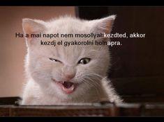 Mosolyogj!!,Reggelire egy tükörtojást?? :-)),Szép új hetet!! :-)),Végre sikerült ,Hajnali recept,Azt hiszem be perelem a Heinekent :-))),Légy rossz :-)),Szomorú valóság,Csak azt nem értem....,Karácsonyi kívánságom! :-)), - yulchee Blogja - Dsida Jenő, Babits Mihály,A nap idézete,A nap idézete/Lucien del Mar/,A nap verse,Ady Endre,Anthony de Mello,Anyáknapja,Az életről,Baranyi Ferenc,Bella István,Bényei József,Buddha,Csernus Imre,Dsida Jenő,Ébresztő bölcsességek Joshitól,Erotikus,Fodor…