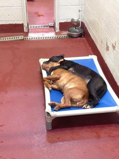 Atl, GA~In the rescue world we visit shelters often, and the vision of pen after pen of overflowing dogs no longer shocks us. Today we visited our local shelter and stopped to stare at these two dogs snuggled up together. These dogs did not come in together but became instant friends in their kennel run. The reality is the odds of these dogs making it out are slim, but maybe this picture will inspire others to visit their local shelter, and ADOPT.