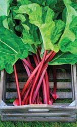 "Growing Rhubarb. Remove rhubarb flowers as they appear. the second year, stems can be harvested from April to June, when the leaves have fully unfurled and the stems are (12"") long.Never take more than half of the stems at a time. Stop harvesting by the end of July."