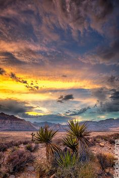 Red Rock Canyon National Conservation Area, Nevada, United States #GeorgeTupak