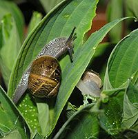 How To Kill Snails and Slugs